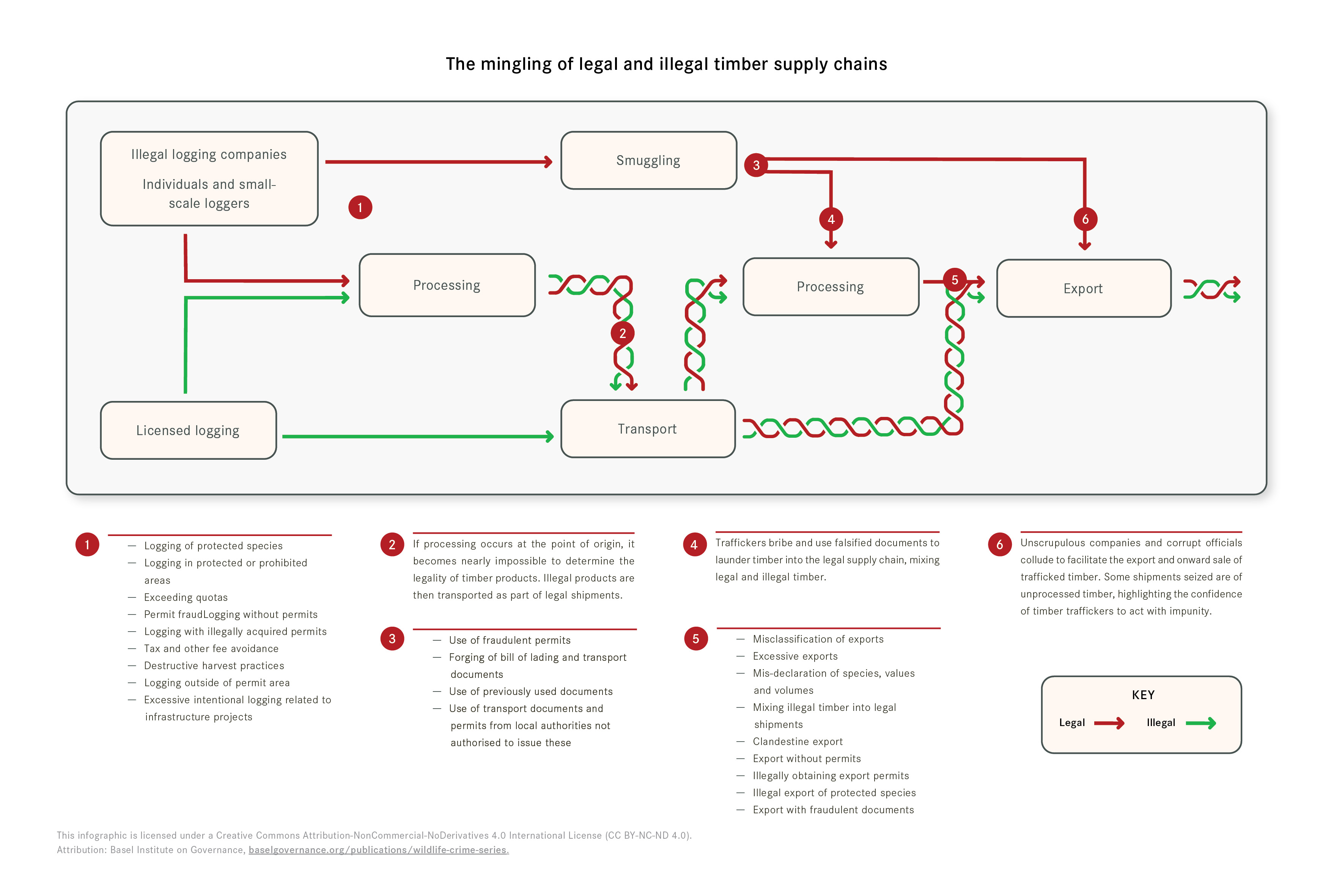 Infographic showing how legal and illegal timber supply chains intertwine