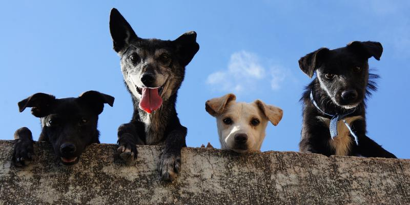 Dogs looking over the wall
