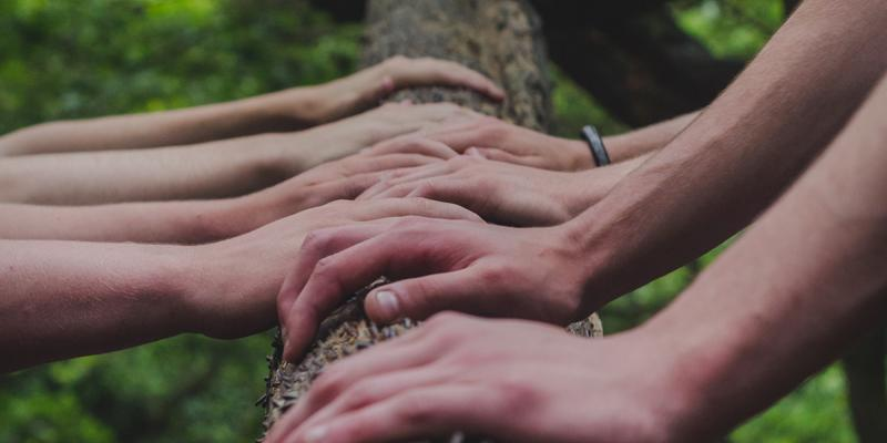 Hands on a tree trunk. Photo by Shane Rounce on Unsplash
